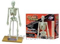 Конструктор Скелет человека